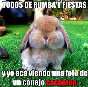 conejo graciosos cacheton